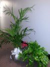 Planter with Fern