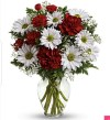 Carnation and Daisy