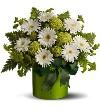 White Gerbers & Green Hydrangea